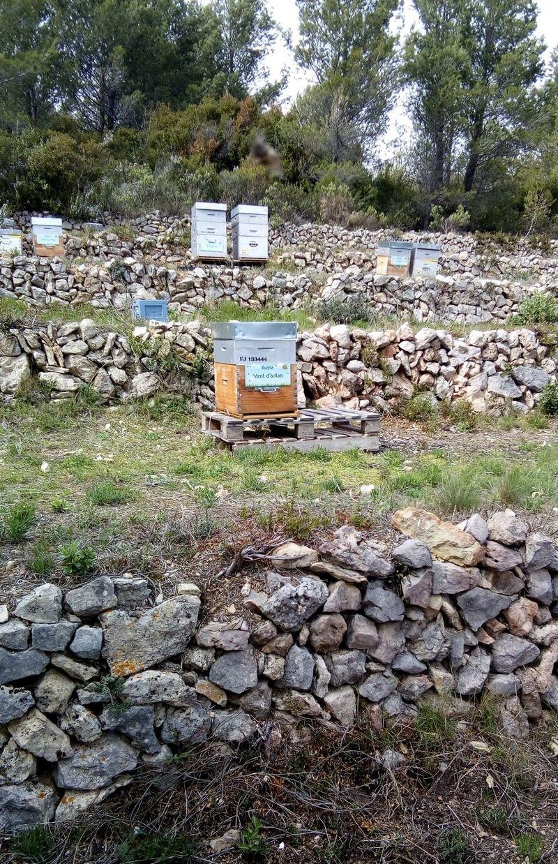 La ruche Vent d