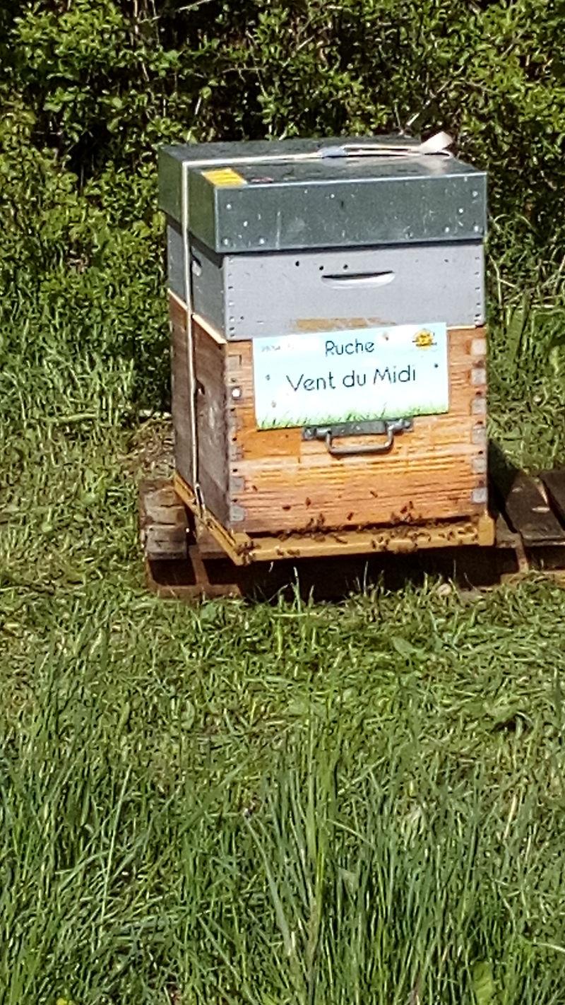 La ruche Vent du Midi