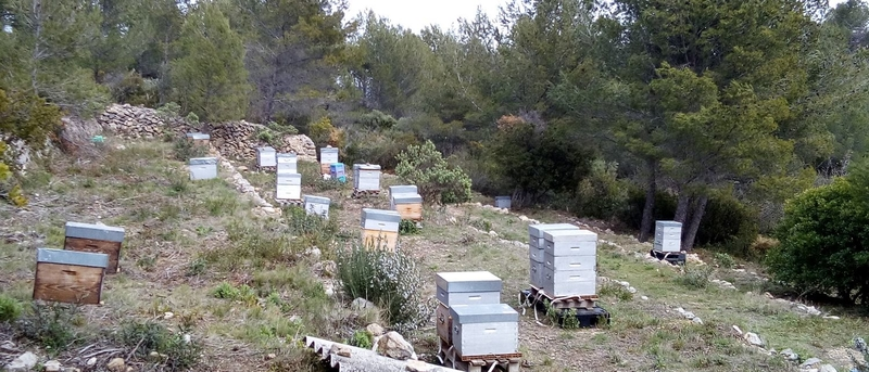 La ruche Zéphyr