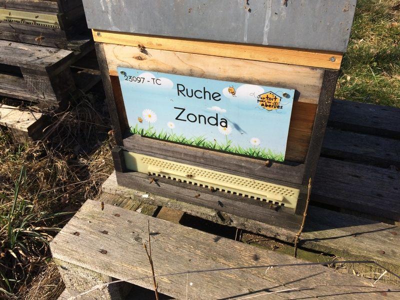 La ruche Zonda