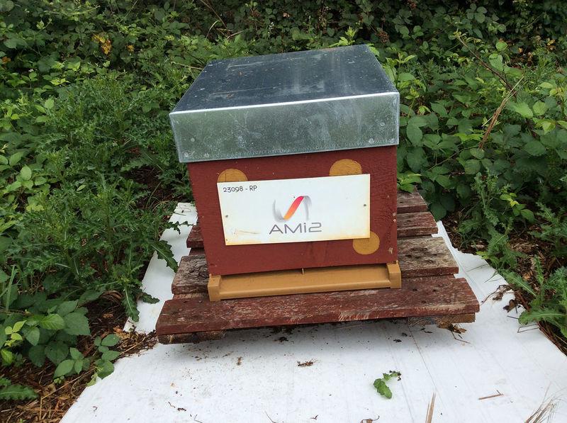 La ruche Ami2