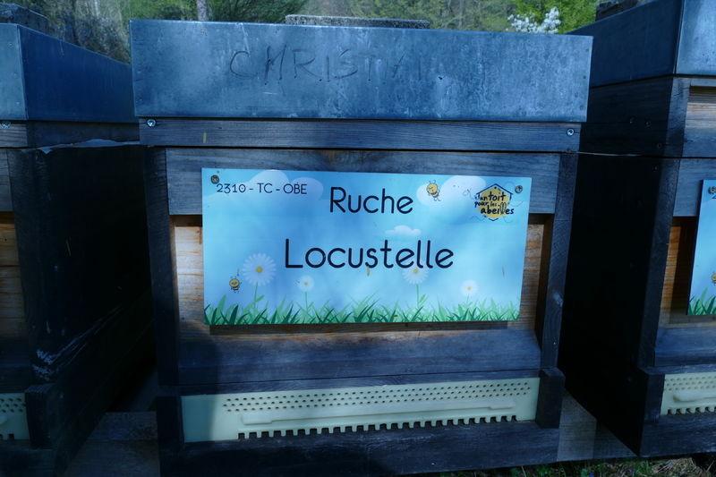 La ruche Locustelle