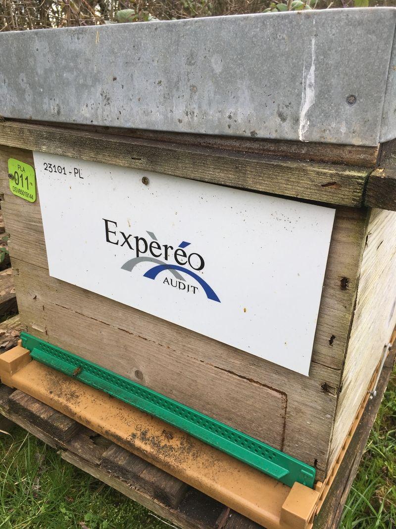 La ruche Expèréo audit