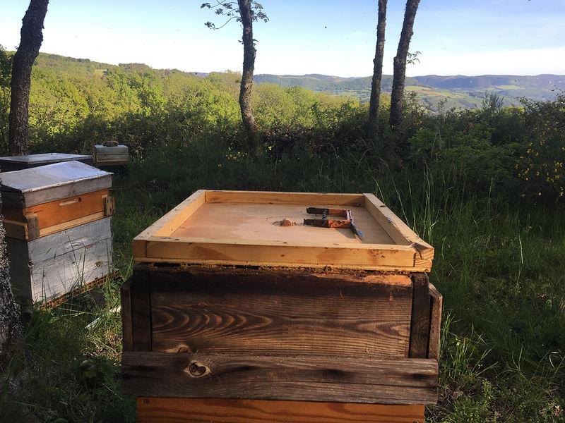 La ruche Truyère