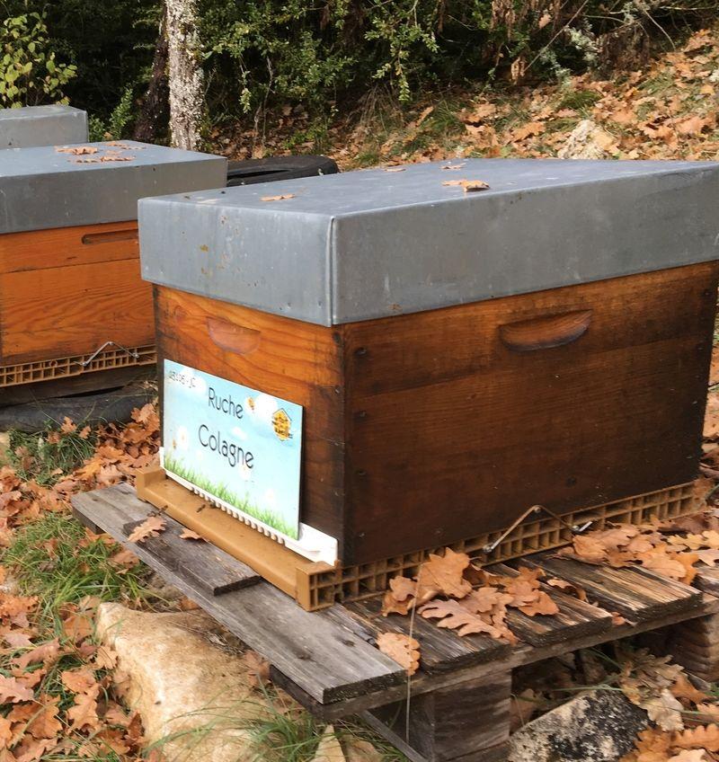 La ruche Colagne
