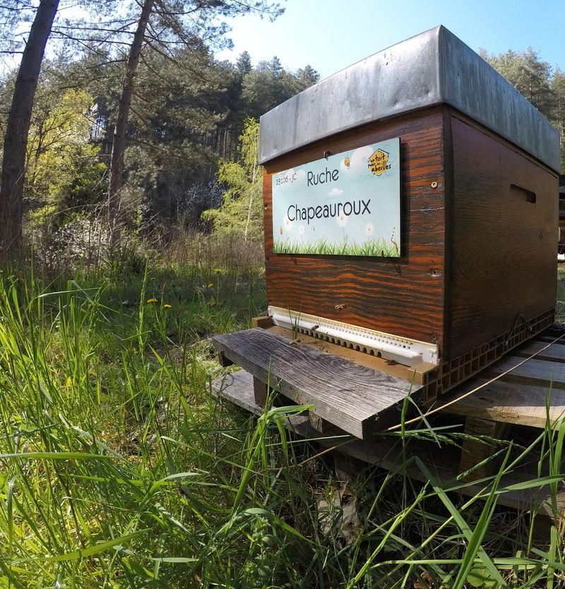 La ruche Chapeauroux