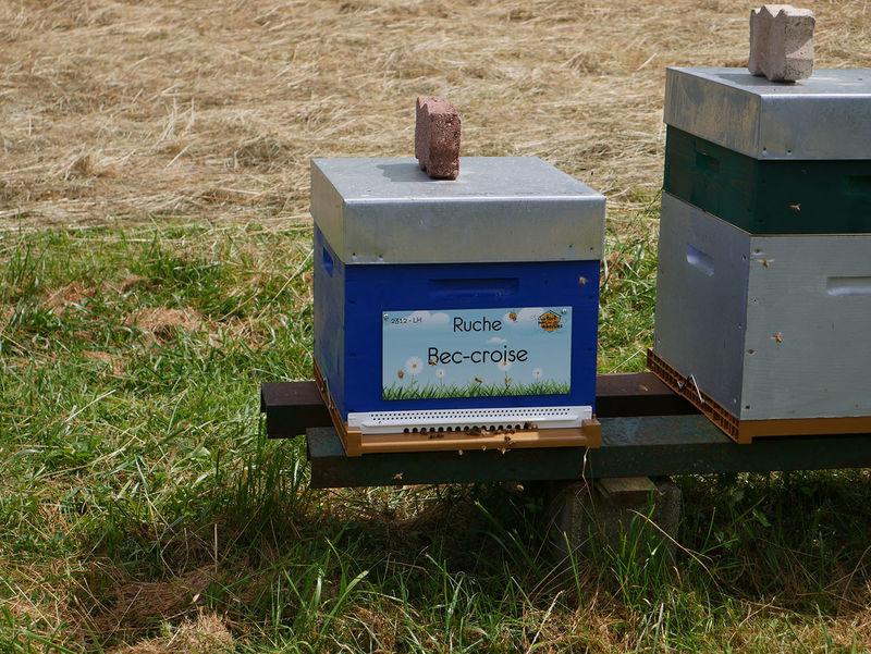 La ruche Bec-croise