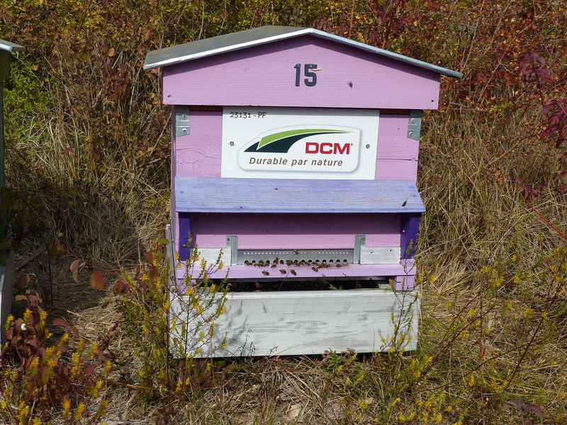 La ruche DCM