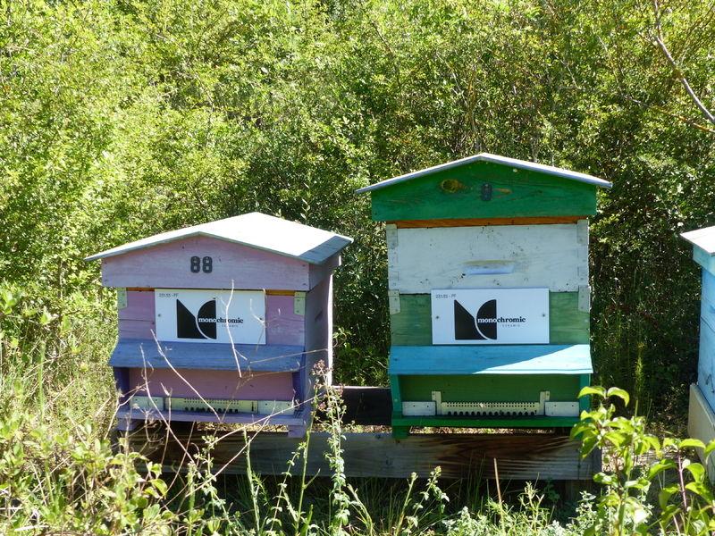 La ruche MONOCHROMIC