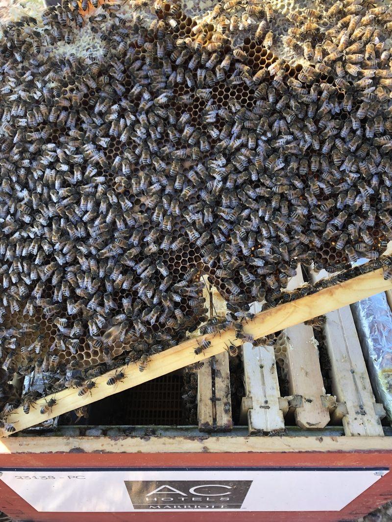 La ruche AC HOTELS