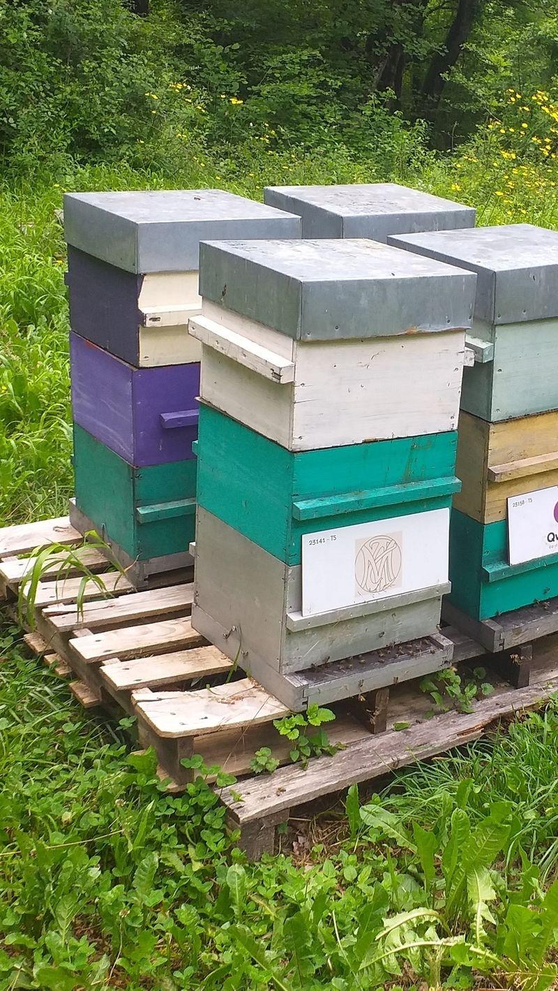 La ruche SARL Conservatoire Murodell