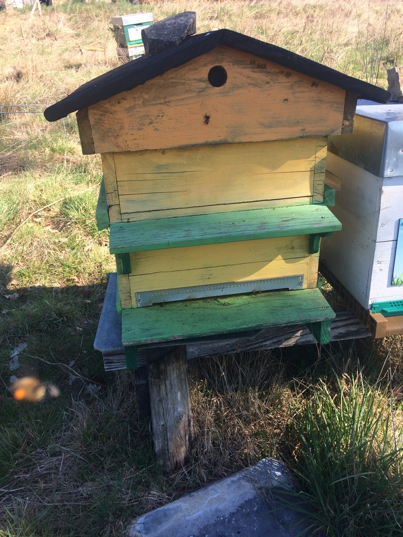 La ruche Cabinet Coulon