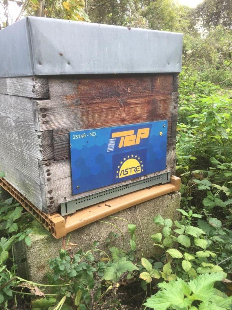 La ruche Astre - TCP