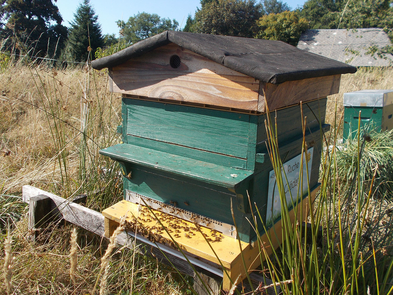 La ruche Clédat