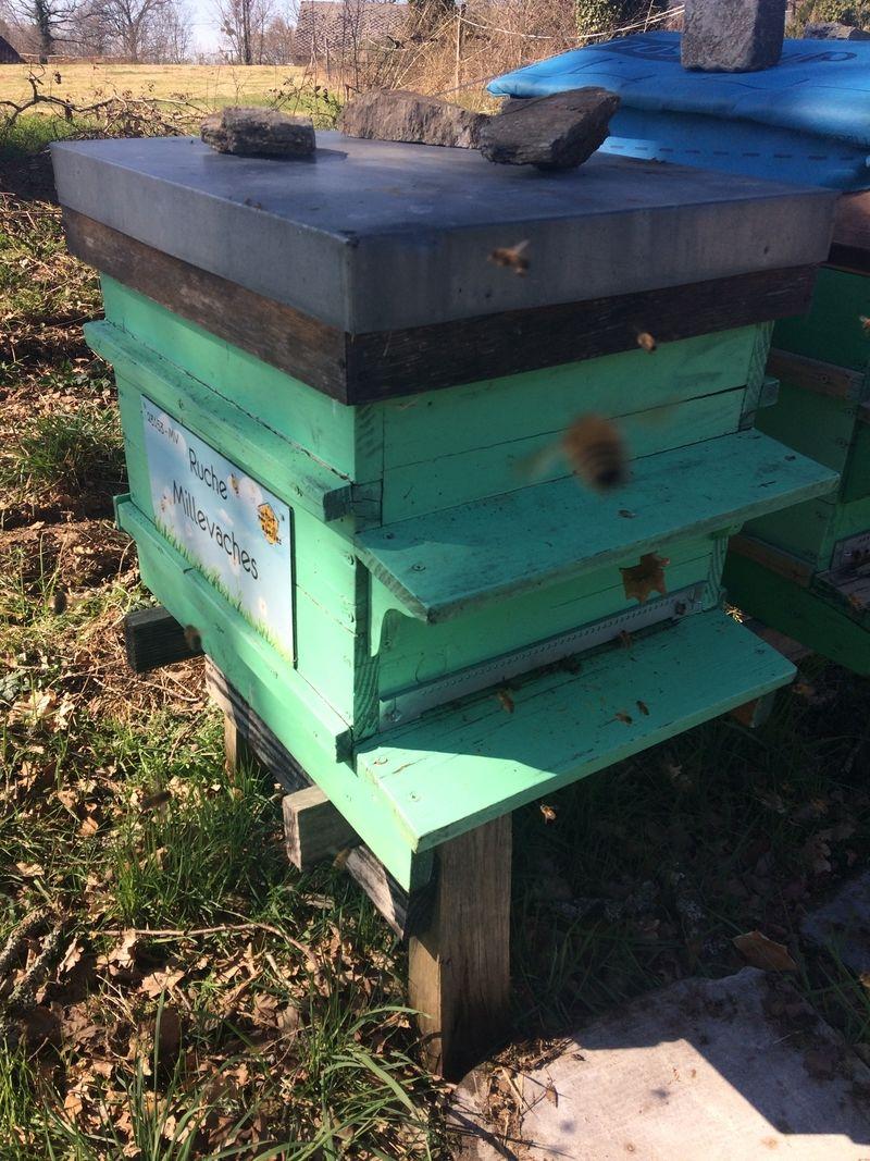 La ruche Millevaches