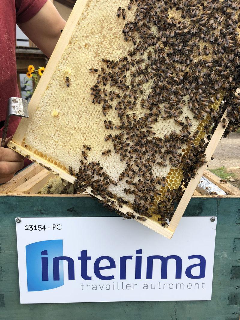 La ruche INTERIMA