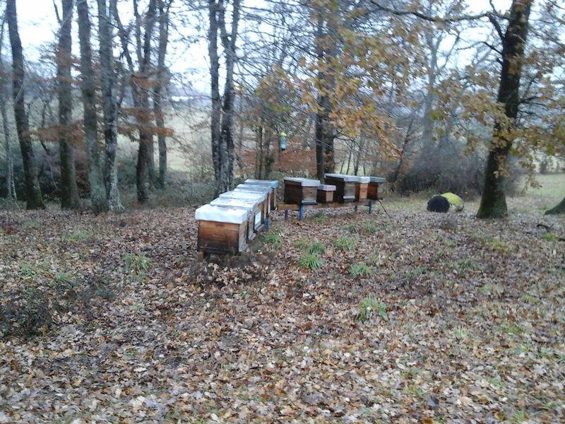 La ruche Astre - Mandico