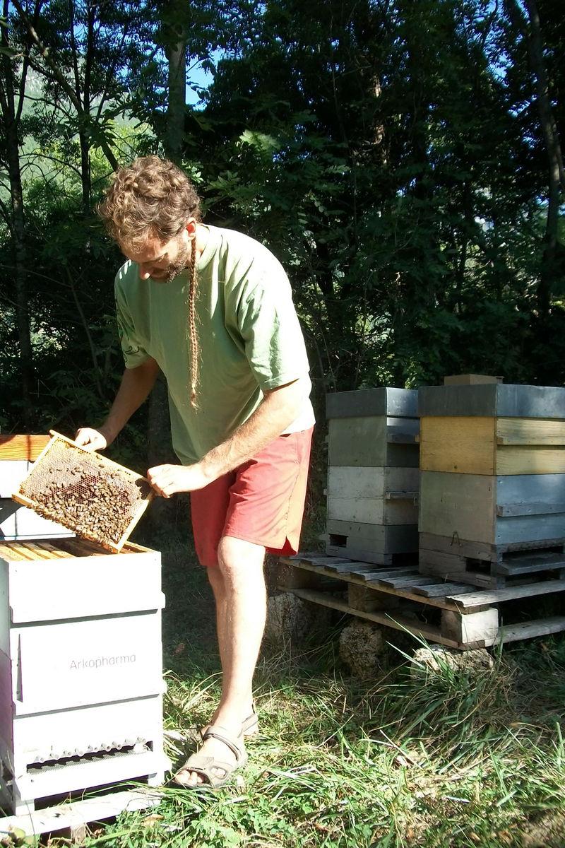 La ruche Laboratoires Arkopharma
