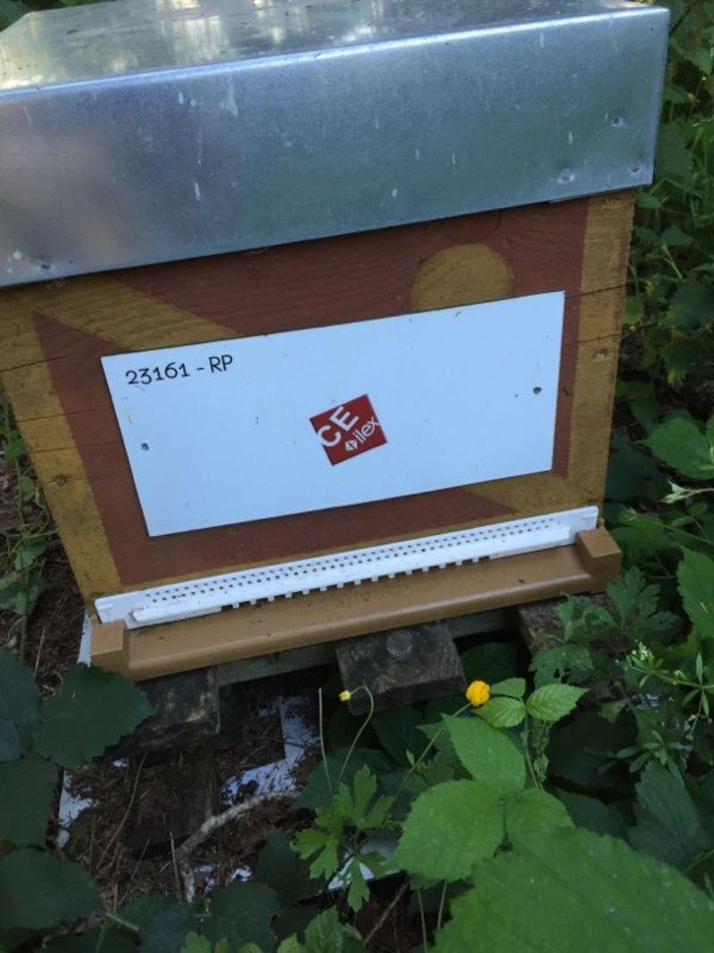 La ruche Ce ilex