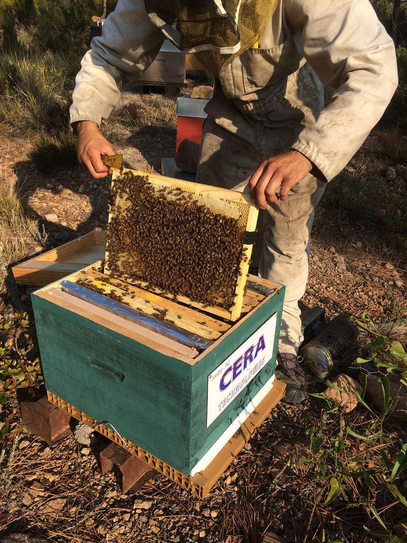 La ruche CERA TECHNOLOGIES