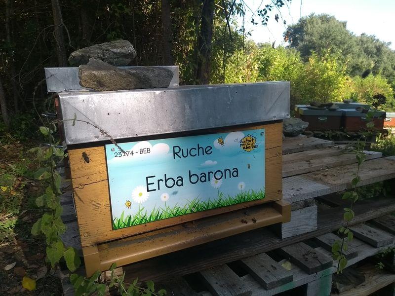 La ruche Erba barona