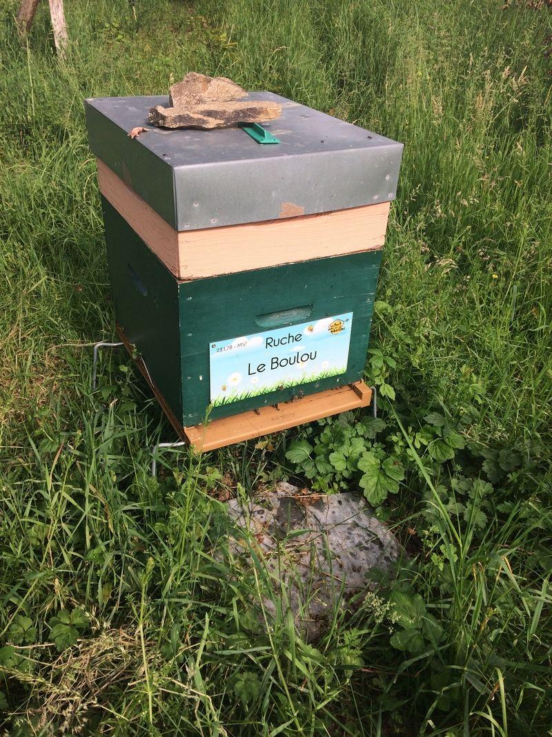 La ruche Le Boulou