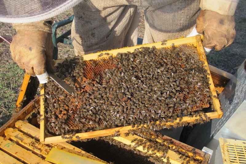 La ruche Leccia