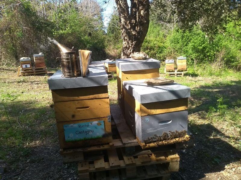 La ruche Castagnu