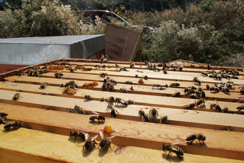 La ruche Listincu
