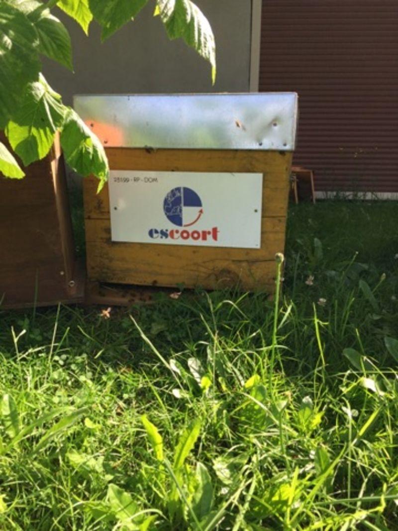 La ruche Escoort