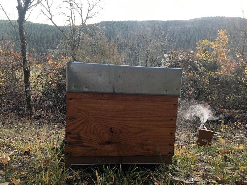 La ruche Lou clapas