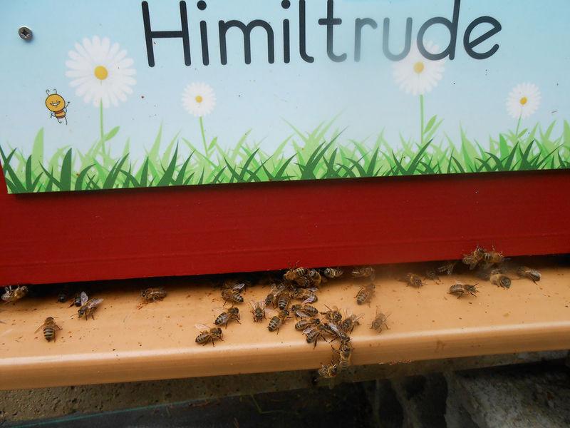 La ruche Himiltrude