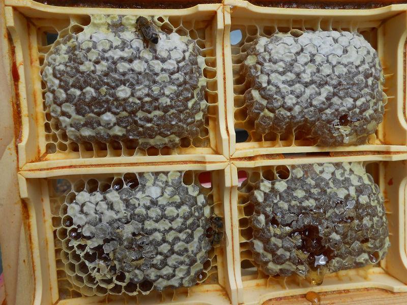 La ruche Désirée de Lombardie