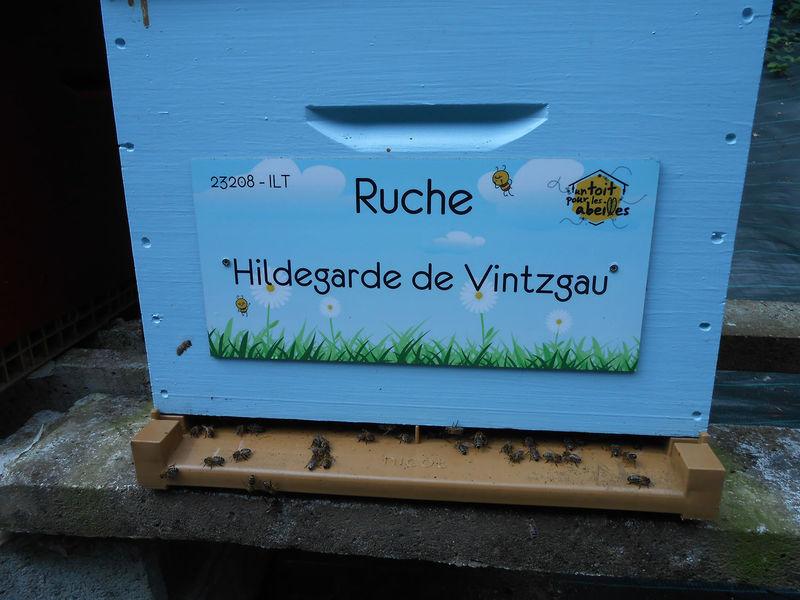 La ruche Hildegarde de Vintzgau