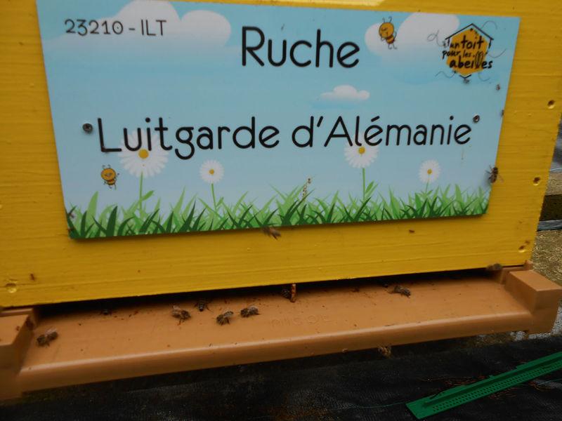 La ruche Luitgarde d