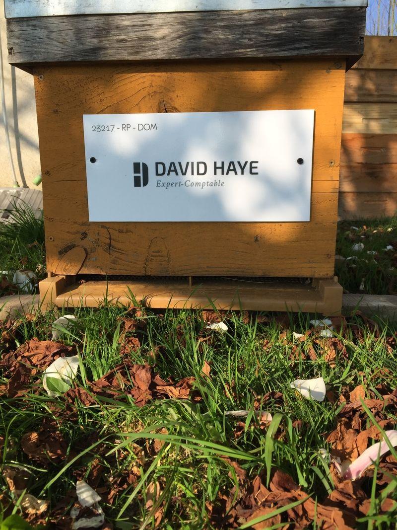 La ruche David haye