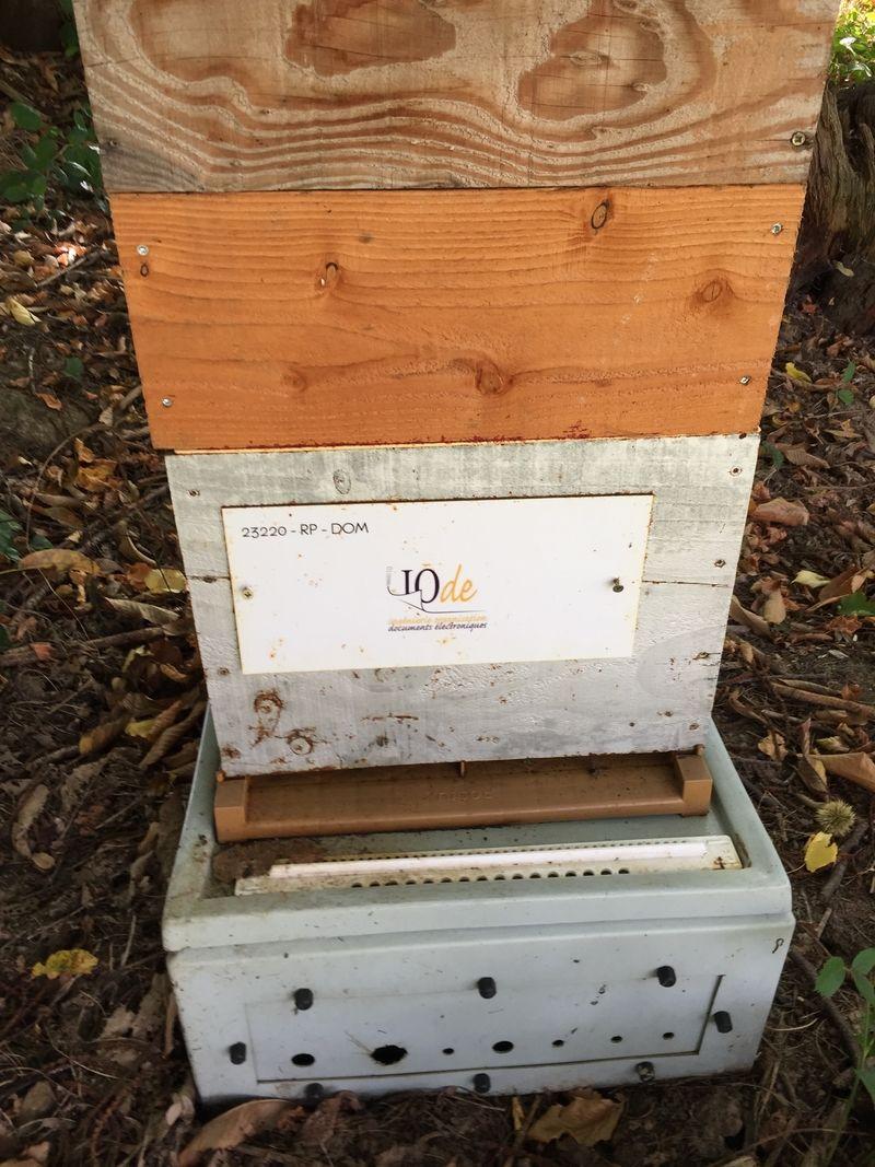 La ruche IODE INGENIERIE