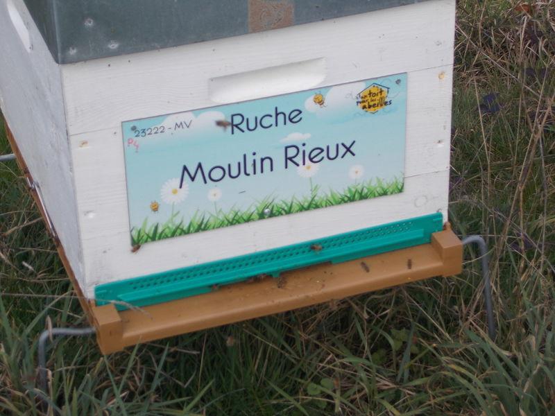 La ruche Moulin Rieux
