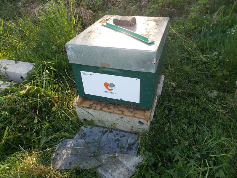 La ruche CE APEC