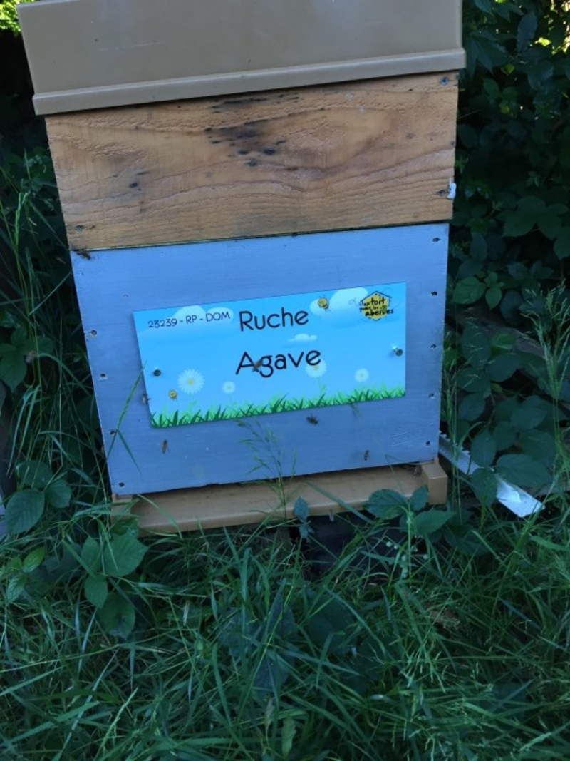La ruche Agave