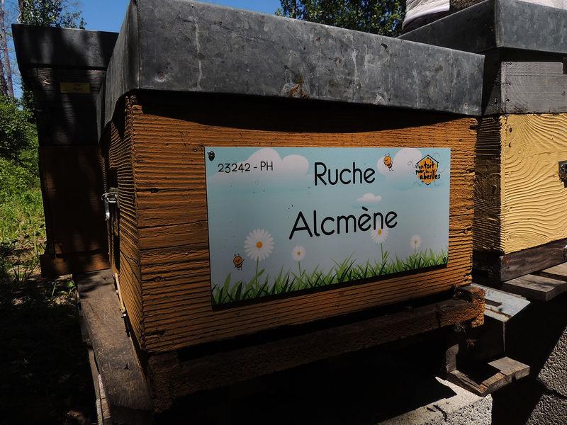 La ruche Alcmène