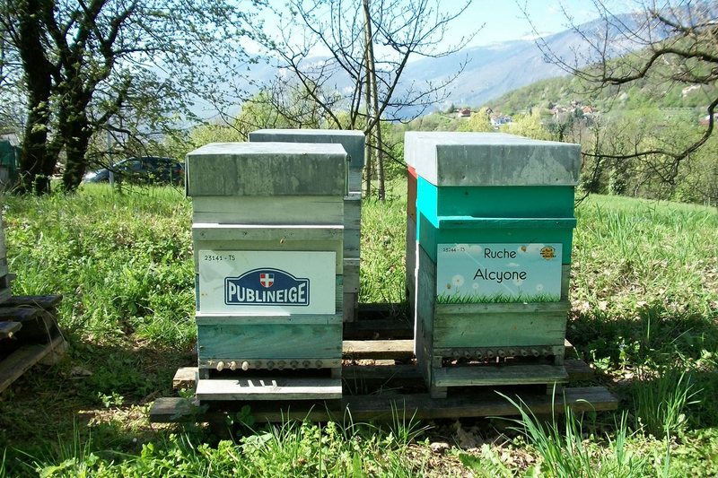 La ruche Alcyone