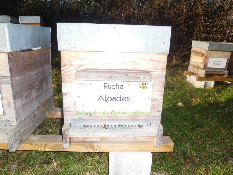 La ruche Aloades