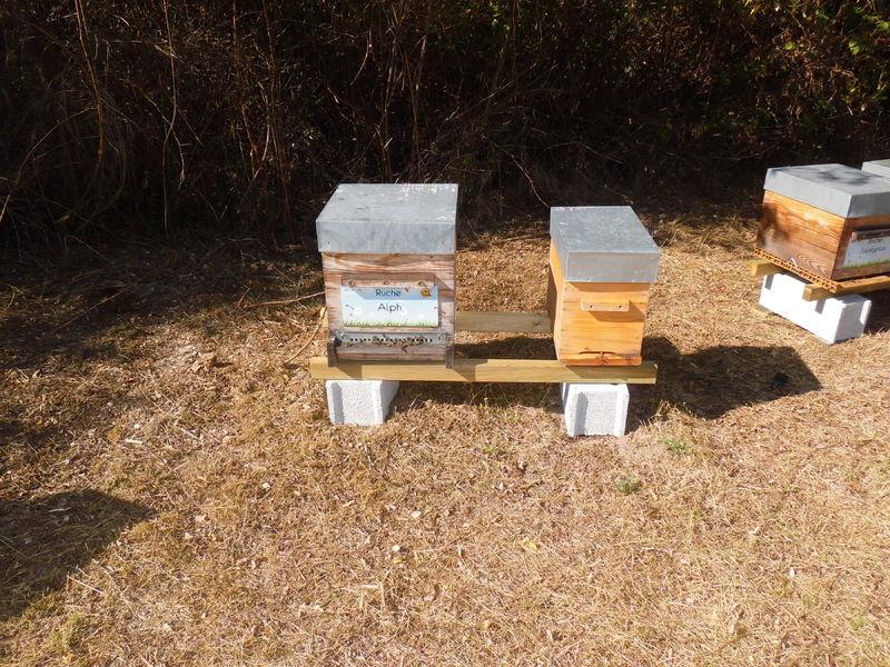 La ruche Alph