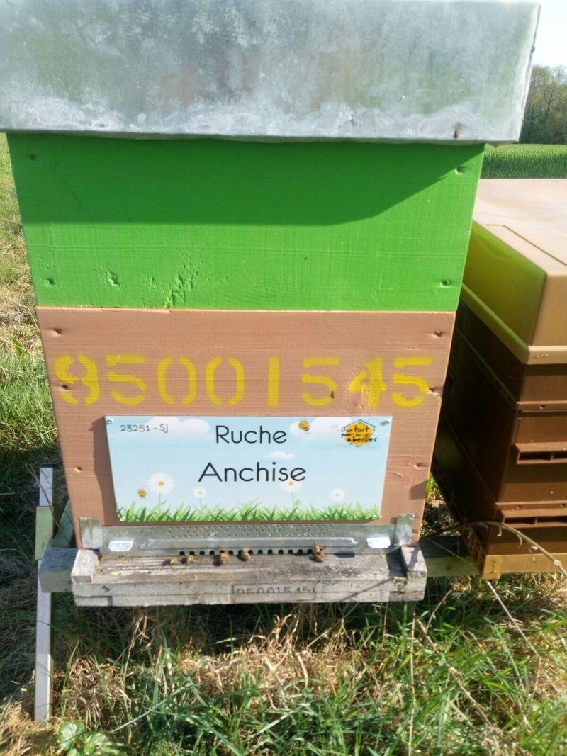 La ruche Anchise