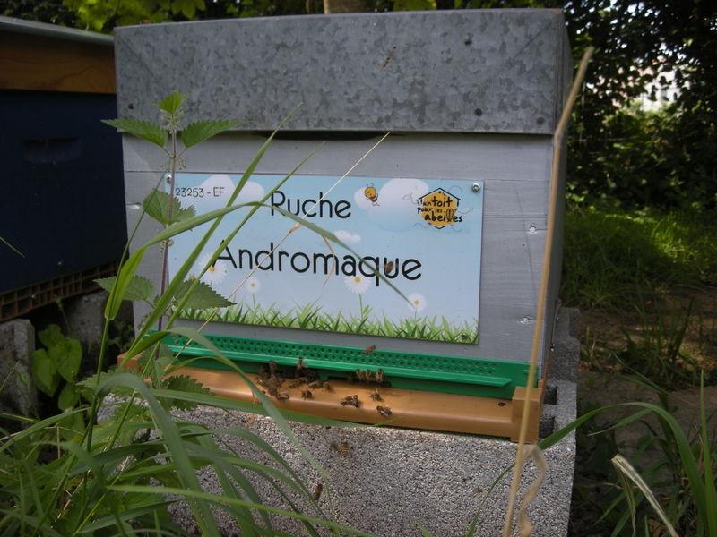 La ruche Andromaque