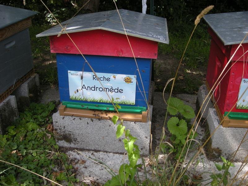 La ruche Andromède