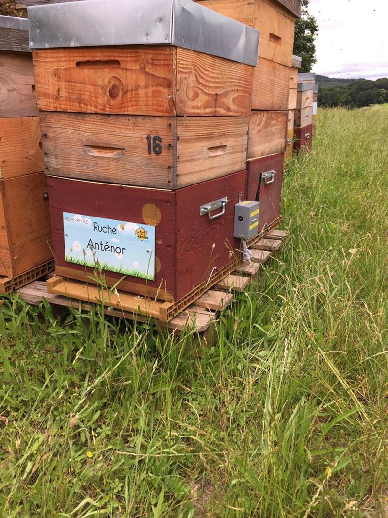 La ruche Anténor