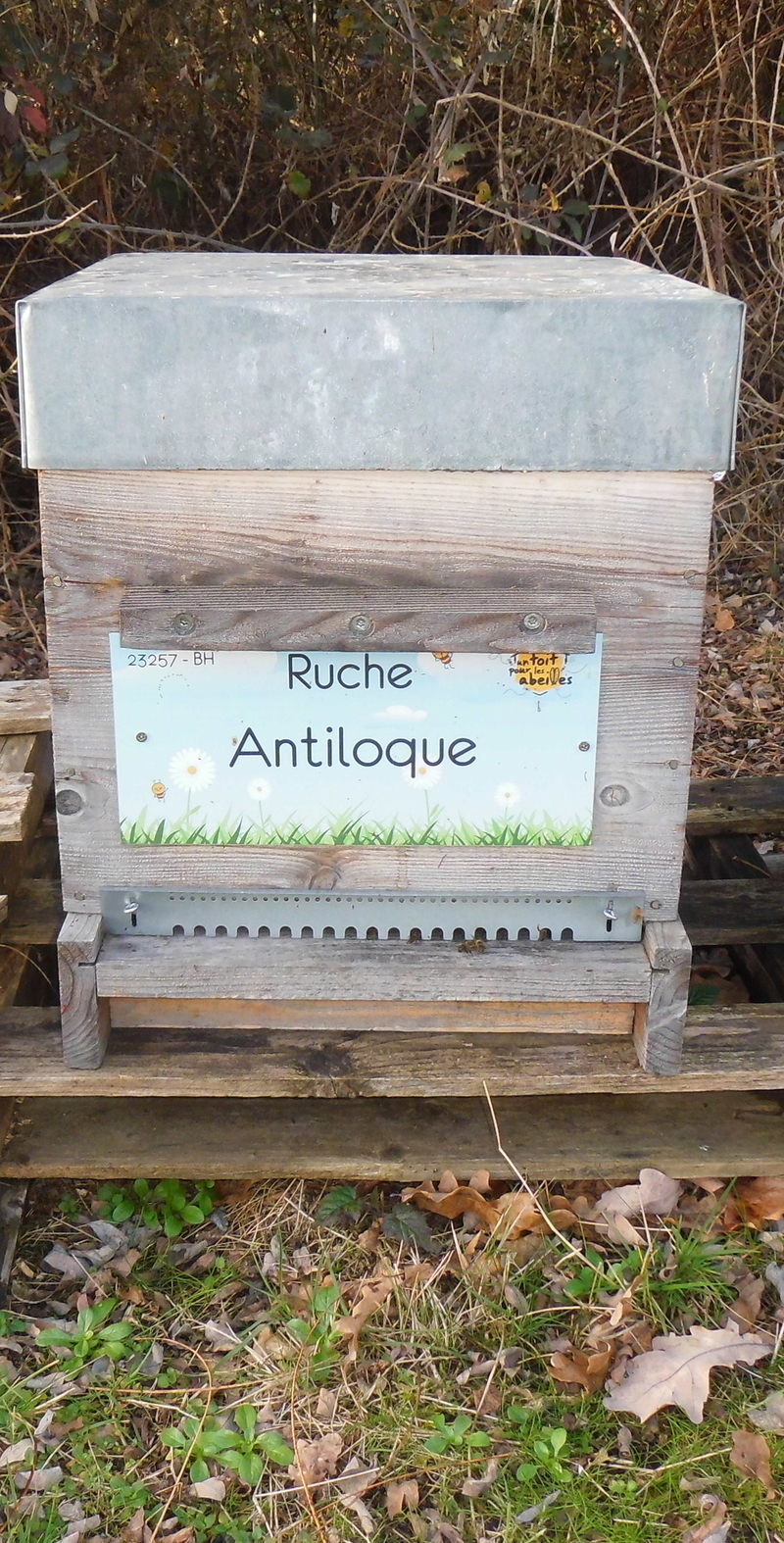 La ruche Antiloque