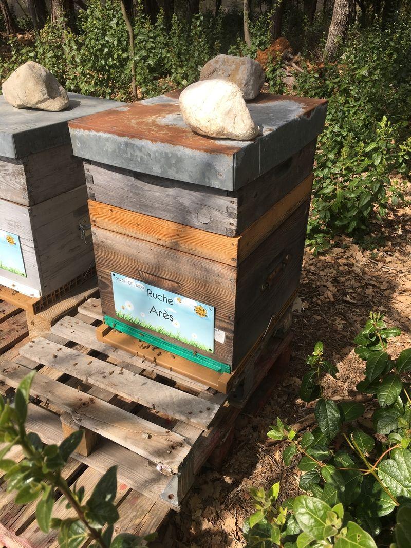 La ruche Arès